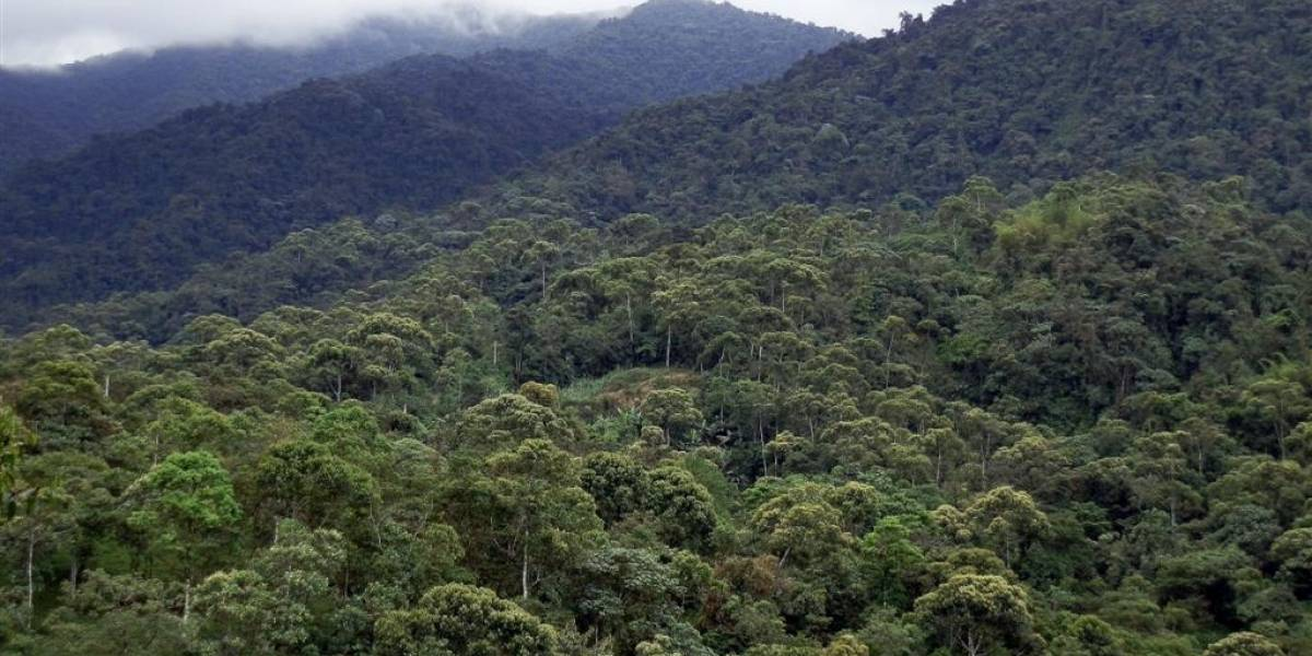 Bosque nublado de Quito se postula como reserva de biosfera de Unesco