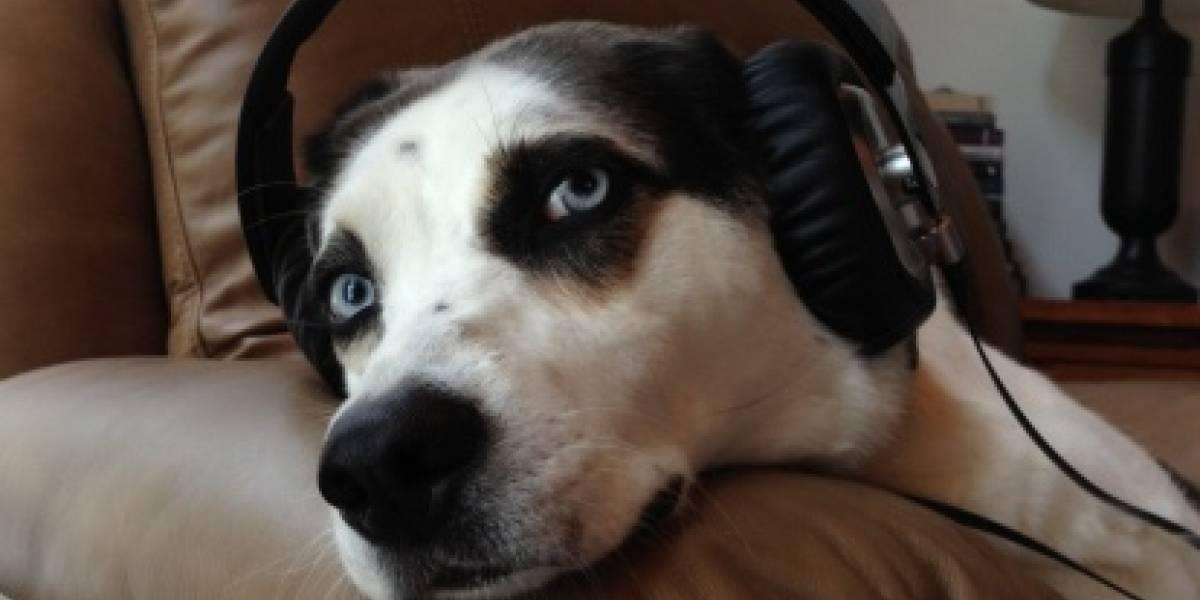 Este es el tipo de música es la que les gusta a los perros
