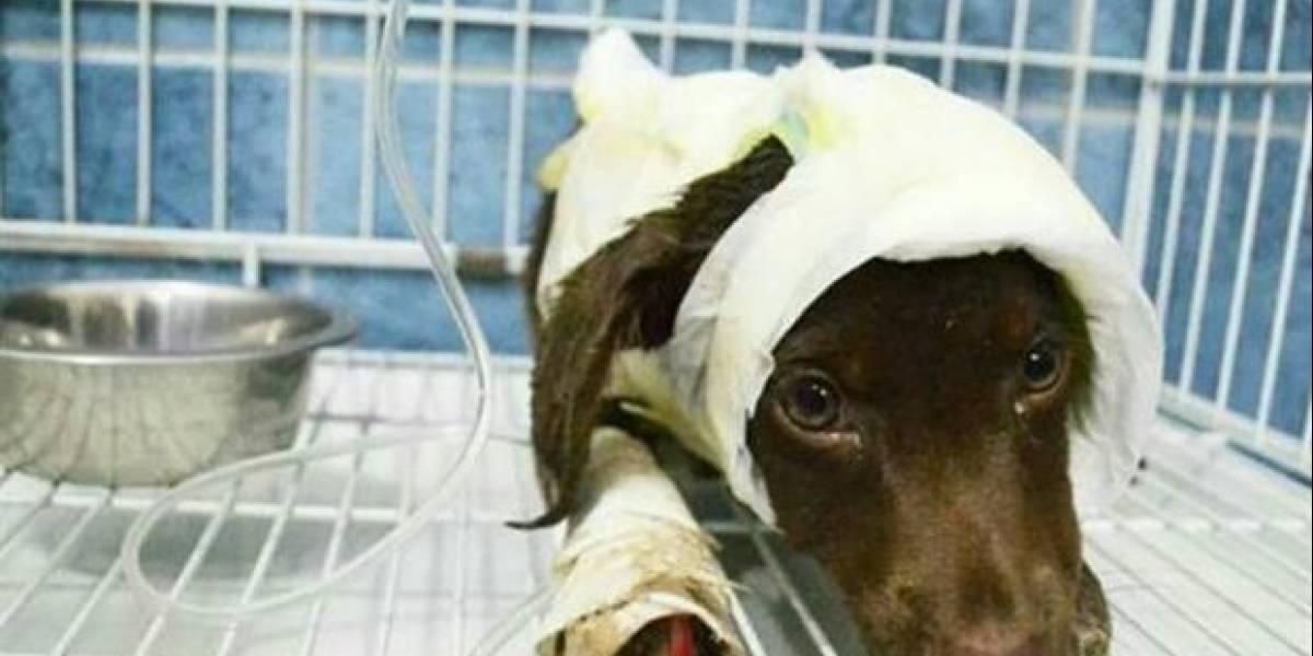 La muerte de un perro despellejado vivo en Argentina, elevada a juicio