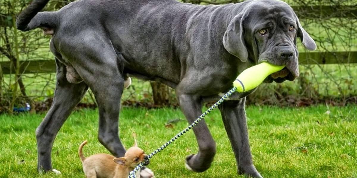 Los SÍ y los NO de la presentación entre perros