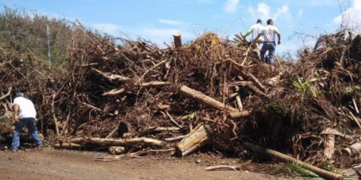Confinados artesanos usarán madera que destruyó María