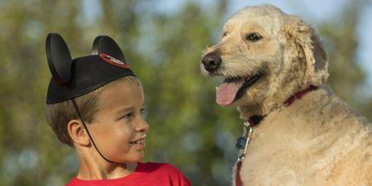 Hoteles de Disney aceptarán perros en programa piloto