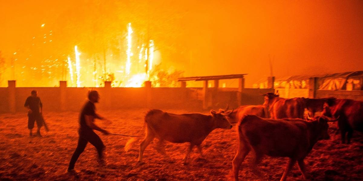 Al menos 36 muertos por incendios en Portugal