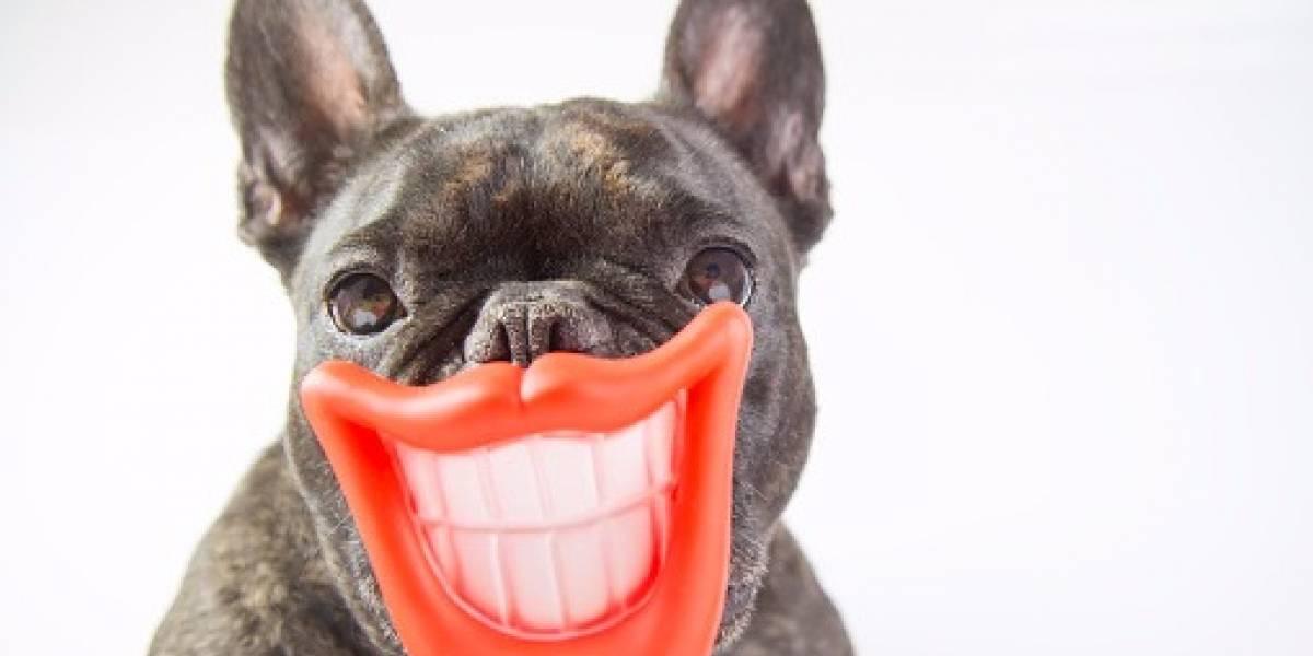 Cuatro consejos para disfrazar a tu perro para Halloween