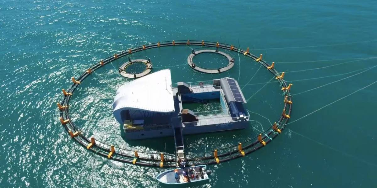 Así es 'El Nido', santuario para protección de la vaquita marina