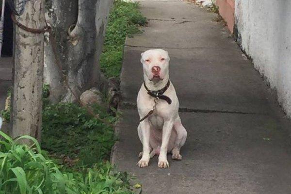 Pide, a través de Facebook, le regresen el perro que le robaron