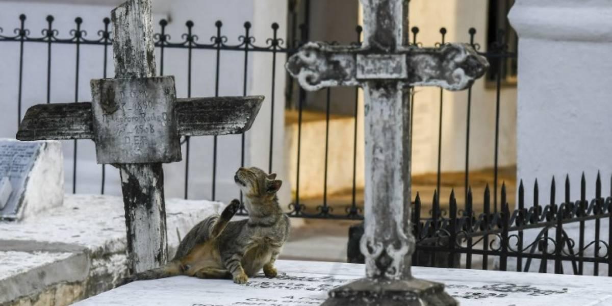 """Cementerios, brujería y gatos: familia salta a la fama tras ser acusada de """"pactar con el Diablo"""""""