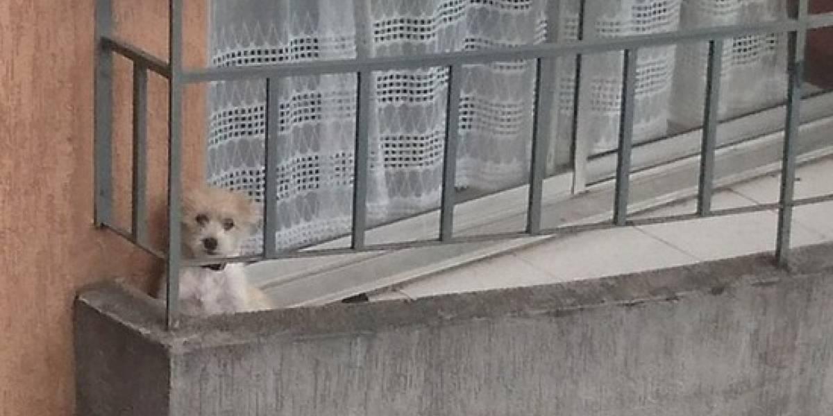 En redes sociales piden ayuda para perrito que está encerrado en un balcón