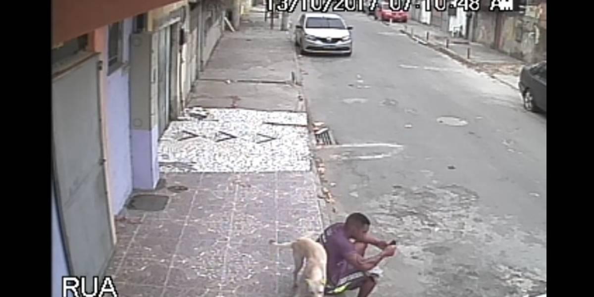 Joven adopta un perro luego de golpearlo
