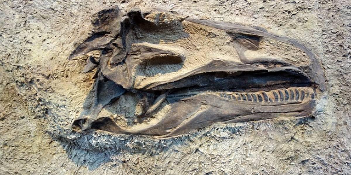 """Video de hallazgo del esqueleto de un supuesto """"dragón"""" se vuelve viral"""