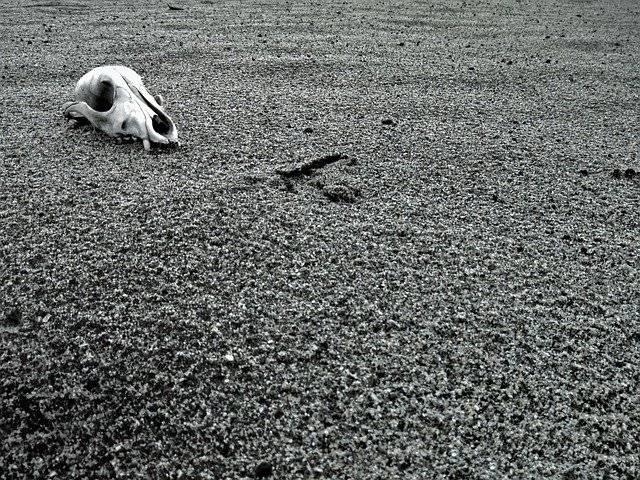 Cráneo en el desierto