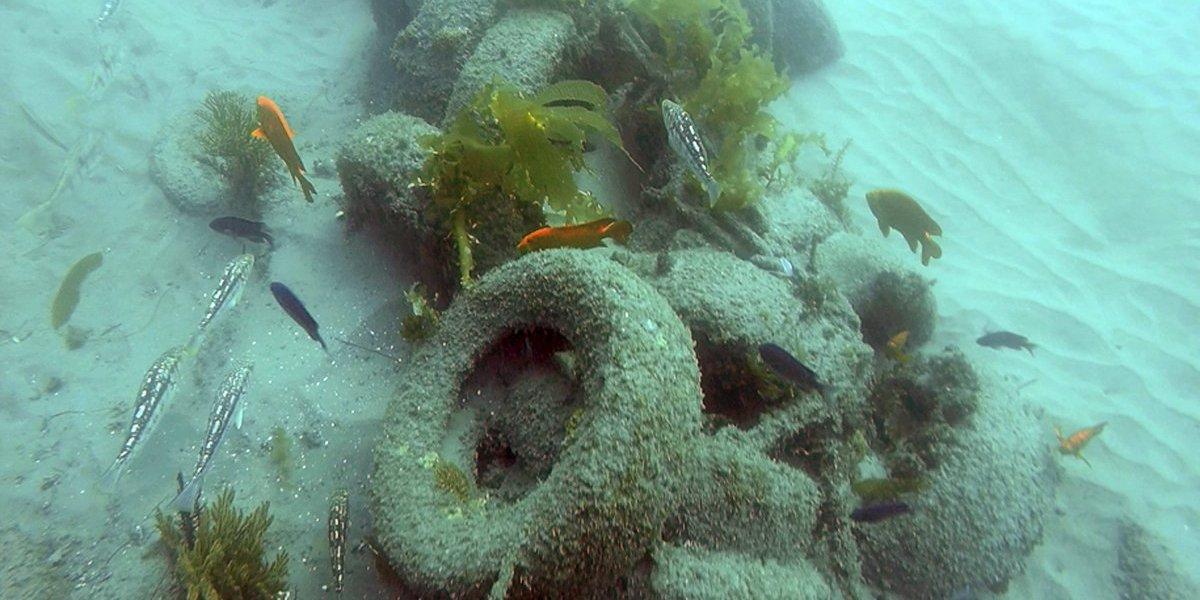 Hombre arrojó basura al mar en California; quería ayudar al ecosistema