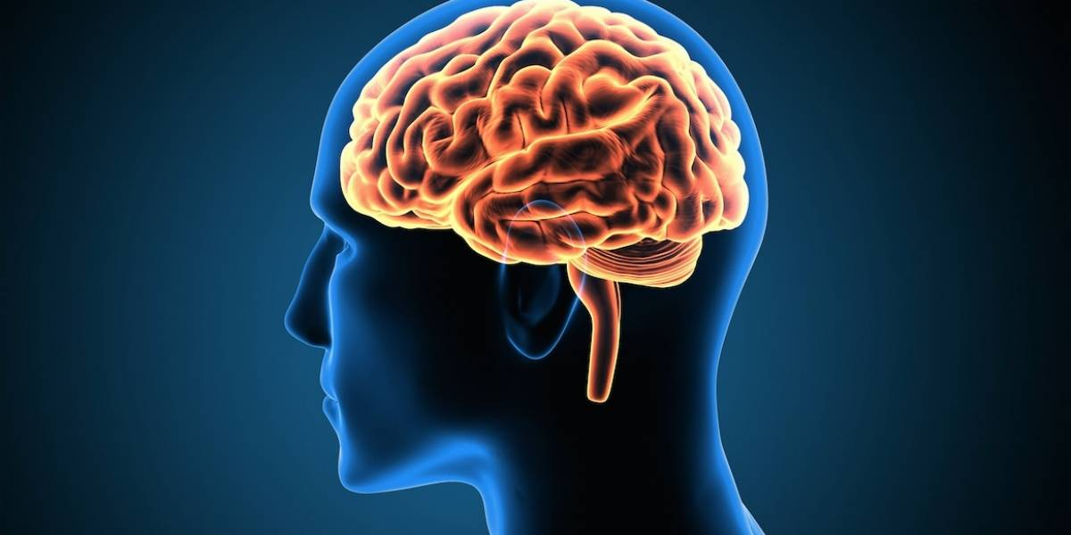 Conoce el cerebro gigante interactivo, en Cayalá