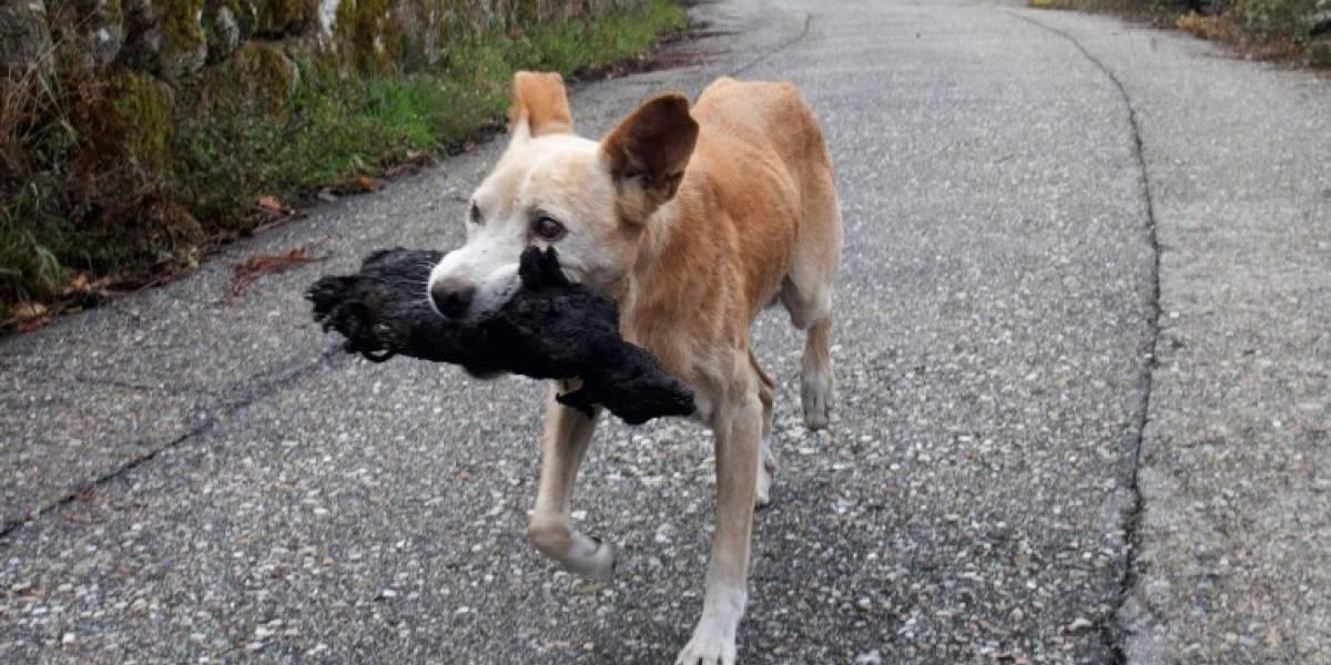 Foto de perrita con el cuerpo calcinado de su cría conmueve las redes