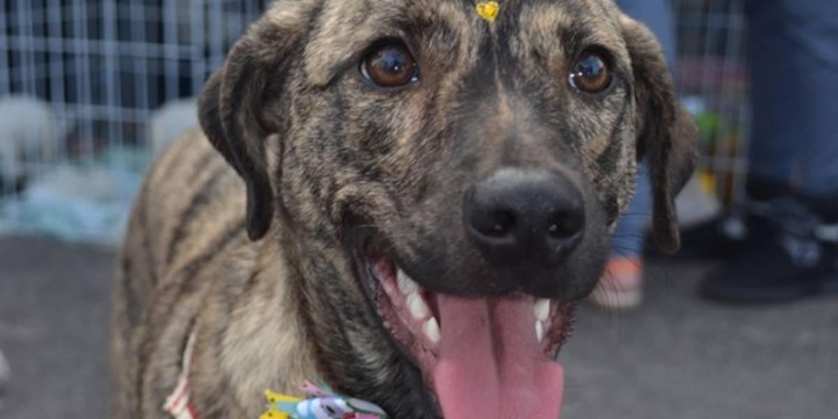 Pets também podem doar sangue e salvar cães e gatos