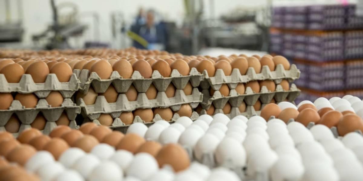 Más de 10 millones de huevos se consumen diariamente en Chile