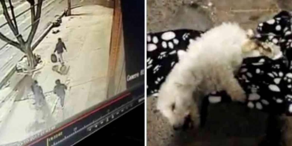 Dueña de una tienda de mascotas botó a un cachorrito agonizante en una bolsa de basura