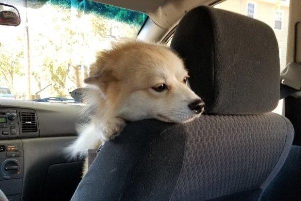 Perro Uber
