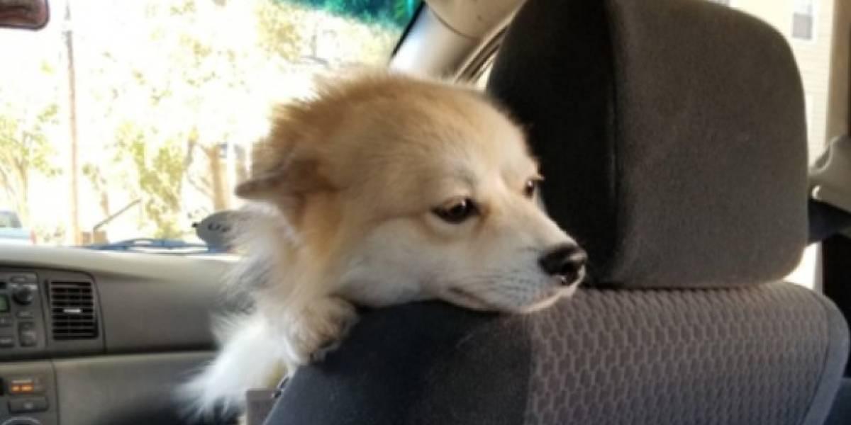 ¿El mejor Uber de la historia? chofer viaja con perrito como copiloto