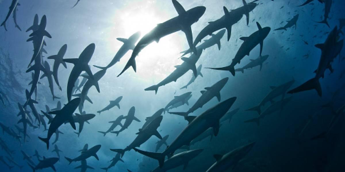 Ecuador suscribió Memorando de Entendimiento para la protección de Tiburones Migratorios
