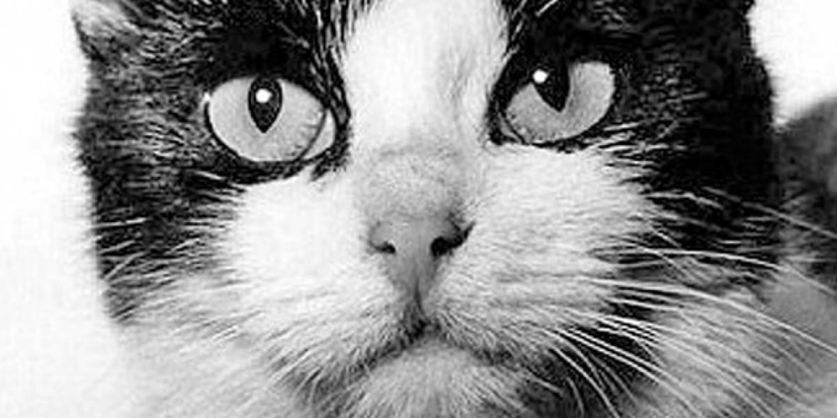 La desconocida y heroica historia del primer gato enviado al espacio hace más de 50 años