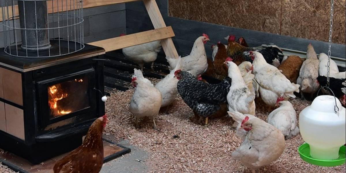 """''¿Gallinas felices?"""": Francia apuesta por prohibir huevos de animales enjaulados"""