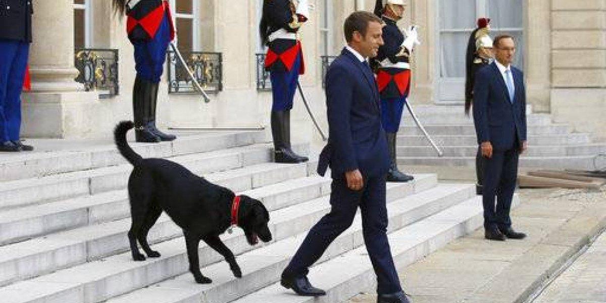 El video del perro de Macron orinando en chimenea del Palacio del Elíseo se hace viral