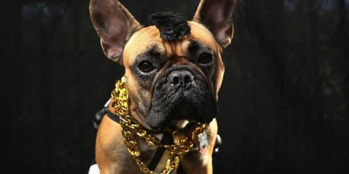 Hueso o Truco, concurso de disfraces para perros, presentado por Metro