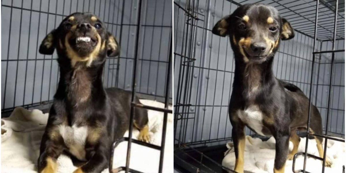 Tiene la pura pinta de bravo: le piden a perrito que sonría para una foto y su reacción enamora a todos