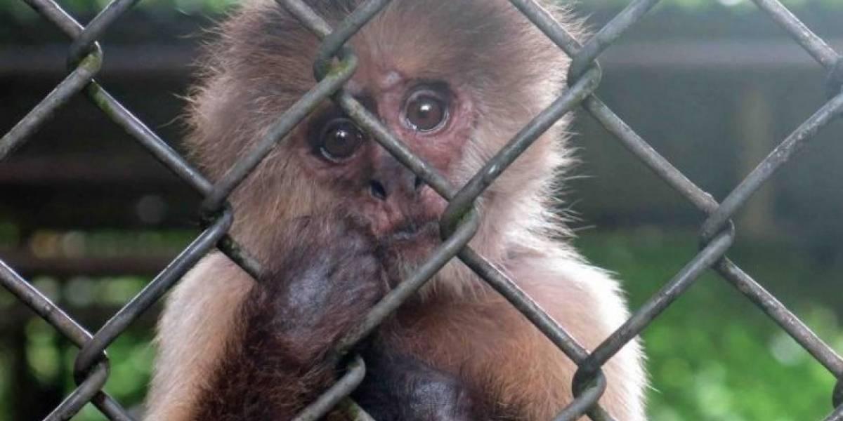 Cámara visitará zoológico de Mayagüez para verificar condiciones tras María