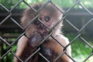 zoológico de Mayagüez