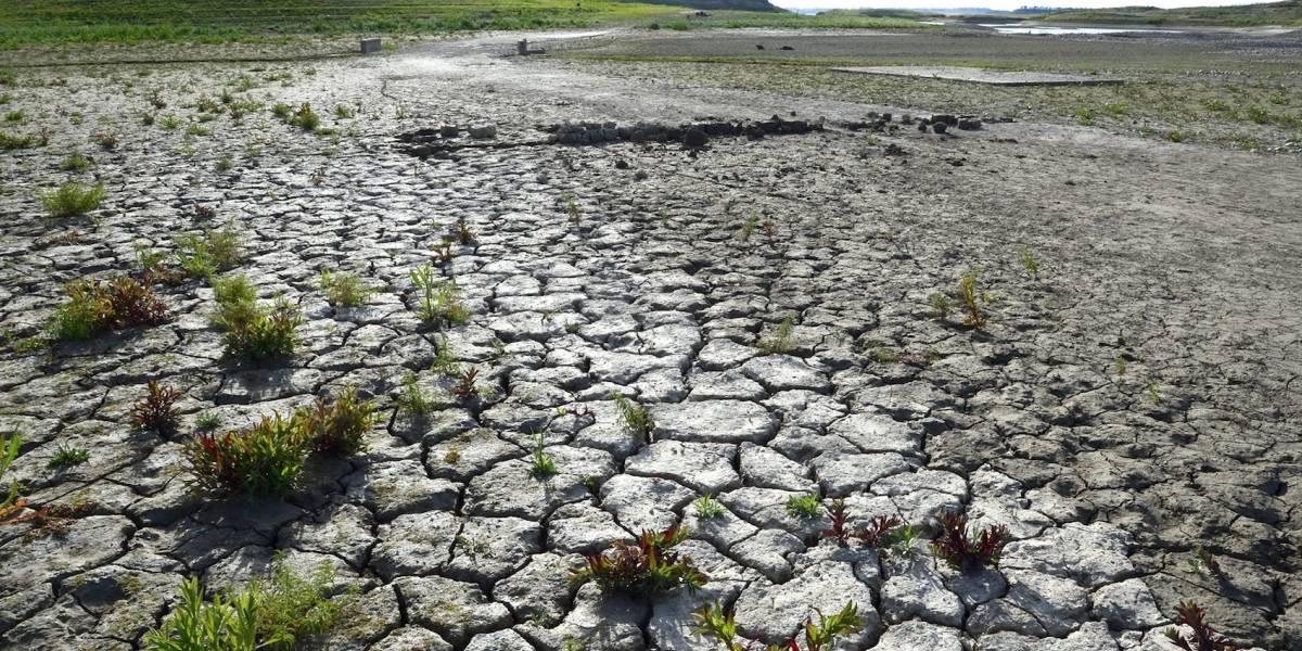 Numerosas sequías acaban con alimentos de 81 millones de personas en el mundo