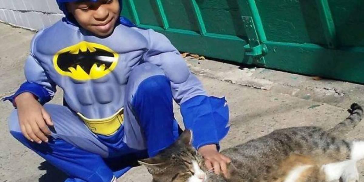 Menino de 5 anos resgata gatos na rua vestido de super-herói