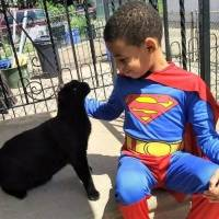 super heroi gato