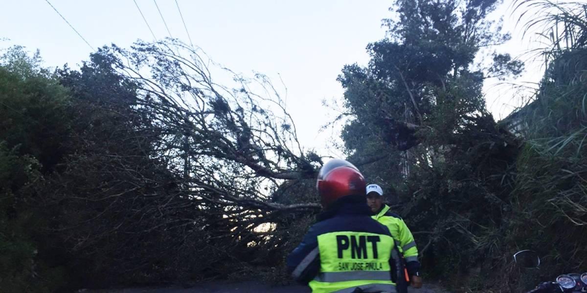 Caída de árbol en ruta a San José Pinula causa complicaciones