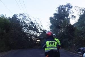Árbol cae en San José Pinula