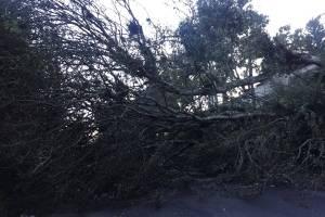 Árbol caído en ruta hacia San José Pinula