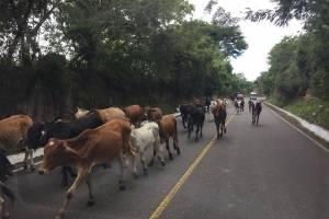 El ganado no se quiere perder la Vuelta