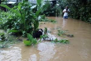 Inundaciones en Panzós, Alta Verapaz.