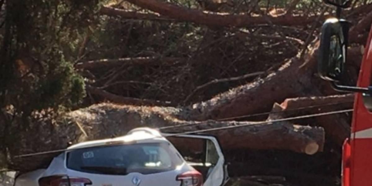 ¿Cuánto se debe pagar si se accidentas contra un árbol?