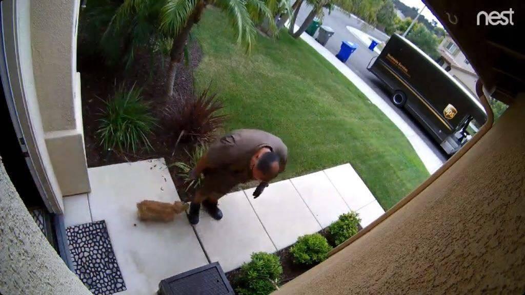 Phil não resistiu aos latidos do Biscoito e parou para dar carinho Reprodução/Facebook/UPS DOGS