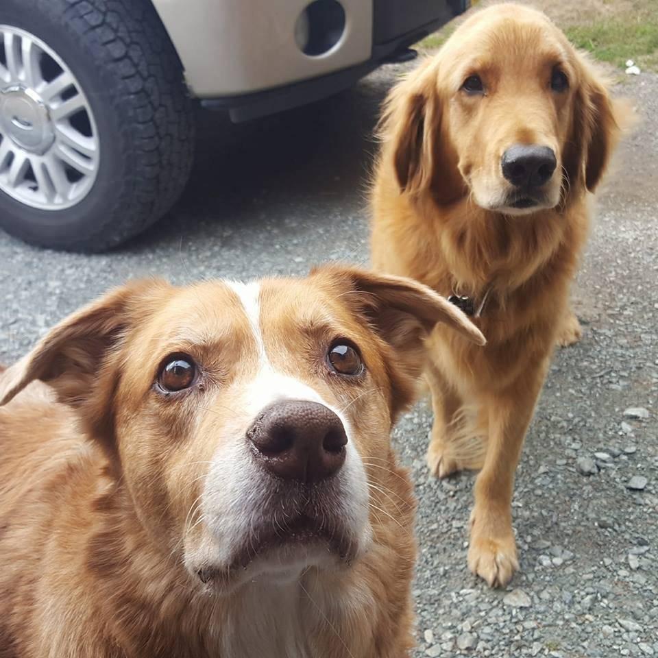 Concentrados no biscoito atrás da câmera Reprodução/Facebook/UPS DOGS
