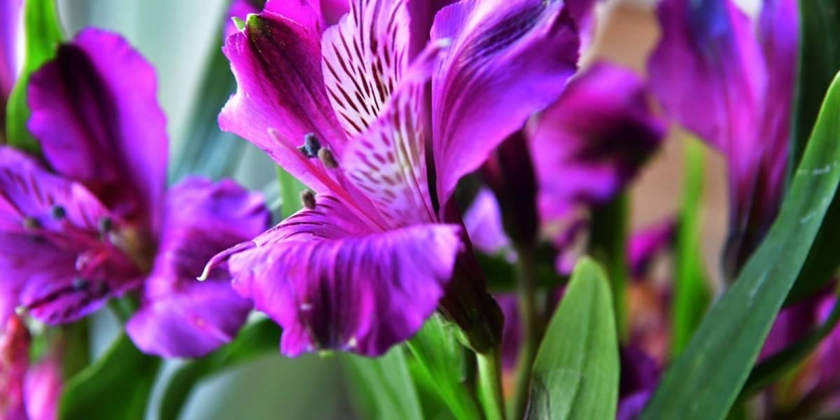 Intercambian flores por suministros