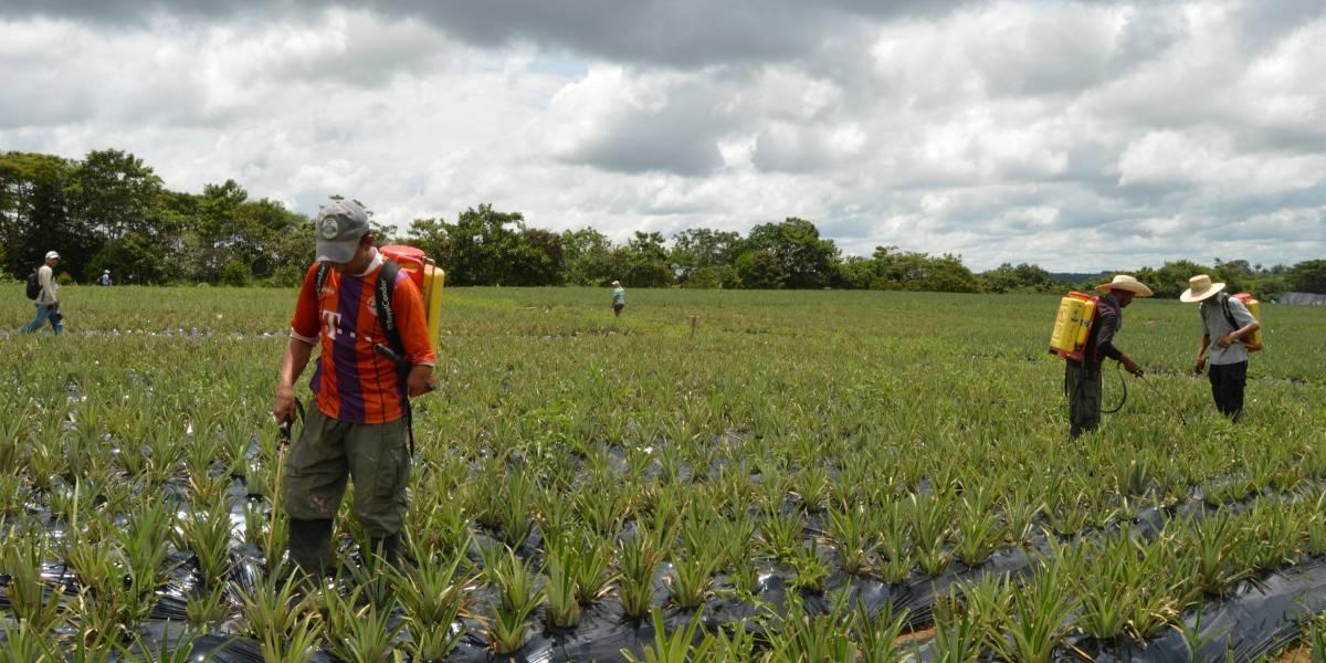 Colombia le pidió a EE.UU. que confíe en su manera de hacer erradicación