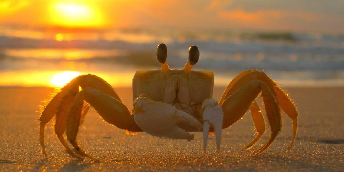 Estamos como los cangrejos... de retroceso