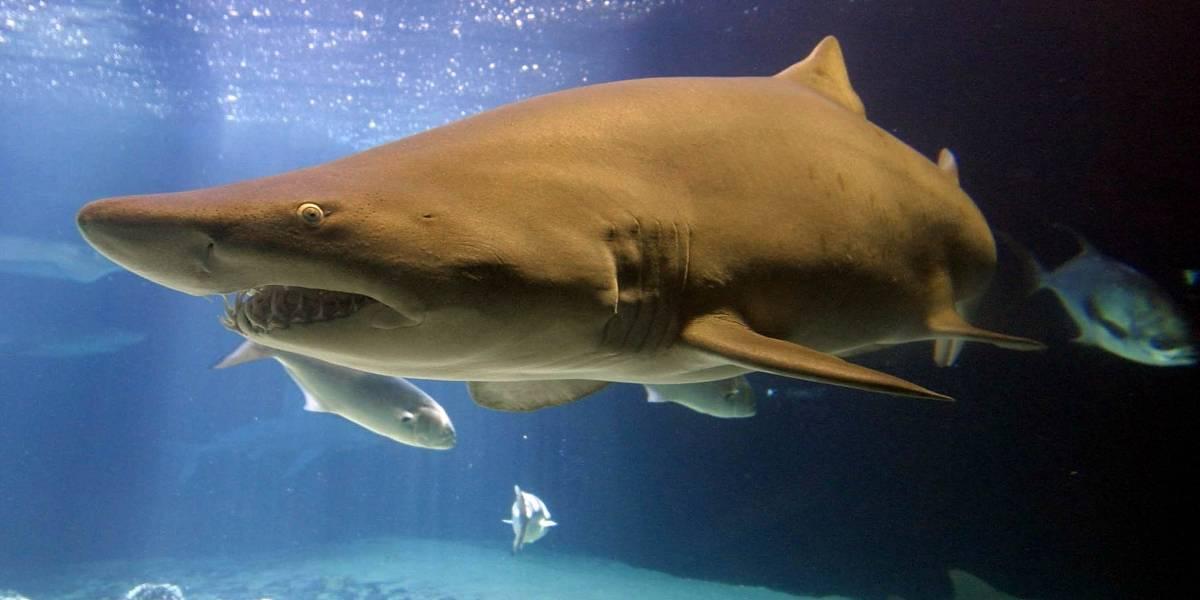 Video: Hombre estuvo a punto de ser devorado por un tiburón en museo de Chicago