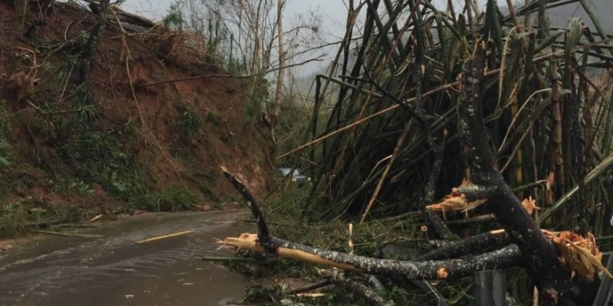 Redoblan esfuerzos de reforestación ante estragos de María