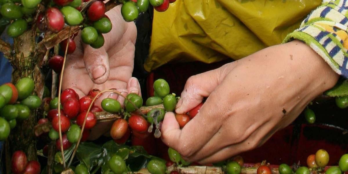 San Alberto La Hacienda Que Produce El Café Más Premiado De
