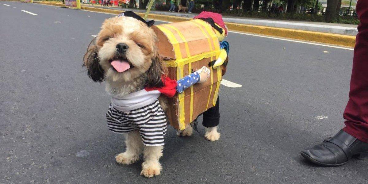 Halloween peludo, caninos disfrazados invaden la Avenida de las Américas