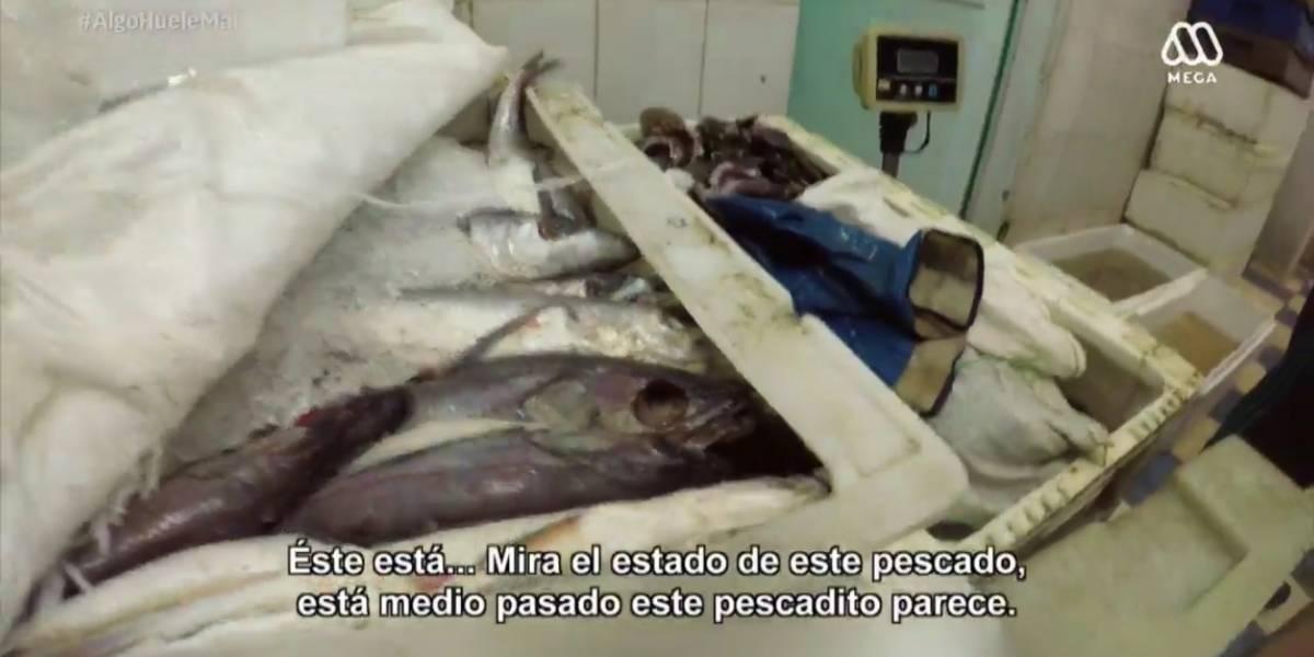 """#AlgoHueleMal: """"Misión encubierta"""" se quedó con el rating y el público reaccionó en redes sociales"""